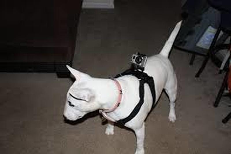 Action camera Sjcam, caratteristiche e informazioni utili
